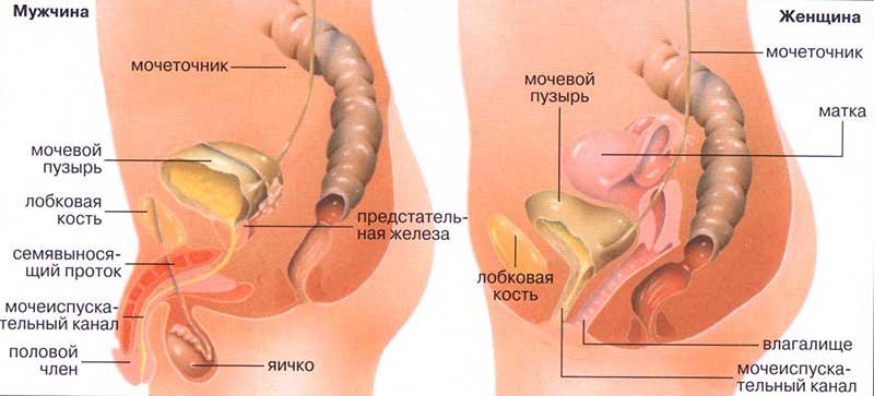 Боль в правом подреберье со спины и спереди